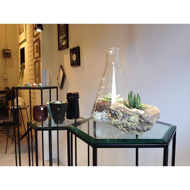 @tiendadomi visiten este fin de semana :) #geoda #suculenta #matraz #terrarium #lab #laboratorio #blanco #negro #plantas #arte #plants #plantstagram #rau #barrioalameda #cdmx #centro #regalos #mesas #tables