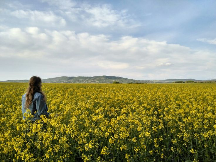 On the rape field