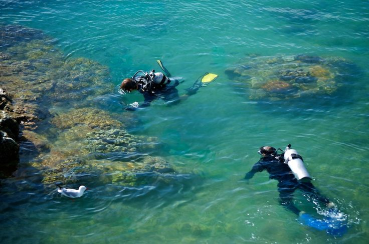 #daydreamisland #whitsundays #scubadive #tropical #island #paradise #greatbarrierreef  http://www.daydreamisland.com/#cruisewhitsundays #awesomewhitsundays