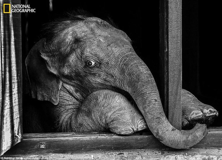 Trunk show: Julia Cumes met this baby elephant while documenting a baby elephant rehabilit...