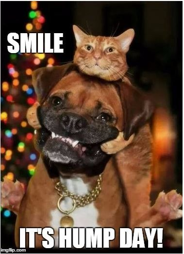 Smile, it's hump day! | Dental Humor | Funny animals ...