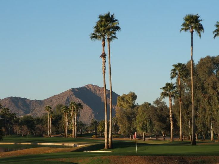 scottsdale  az   palm trees and mountains   ohhhh how i miss this