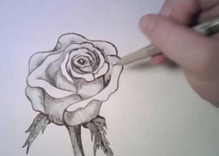 Drawing a rose manga video lessons of drawing painting