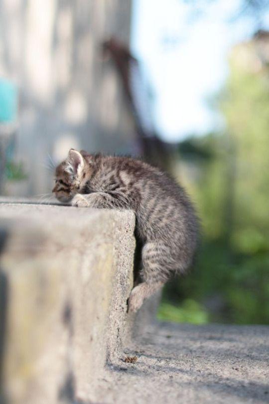 a little kitten and a big step!