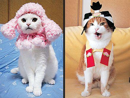 maine coon kittens washington