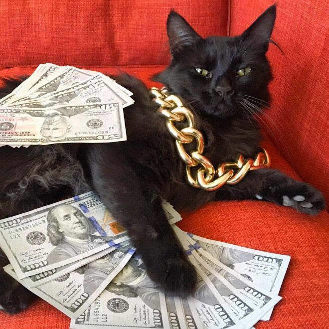 Rich Gangster Cats Flexing Their Wealth Cats Cute Baby Animals Cute Animals