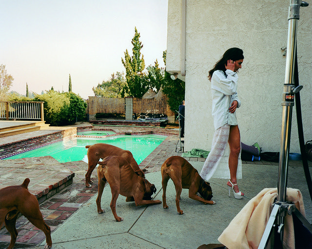 Larry Sultan | Boxer dogs, Mission Hills (1999-2003) | Available for Sale | Artsy