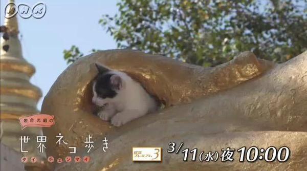 """なんだこの癒しは! 『世界ネコ歩き』チェンマイ編の""""猫×仏像""""にやられた - Togetterまとめ"""