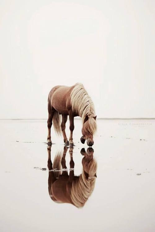 horsesenvogue:  by Gígja Einarsdóttir