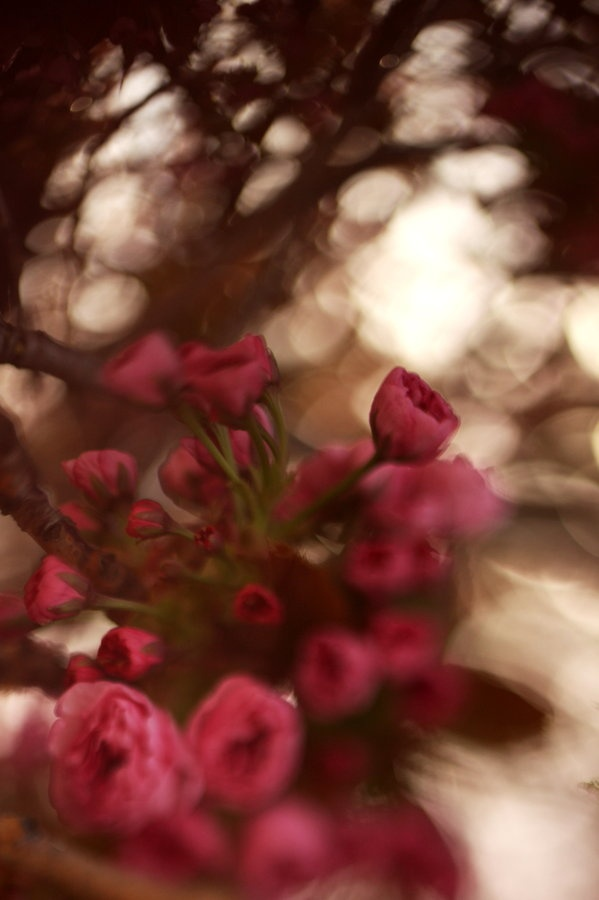 Freelensing method to capture dreamy images of the blossoms