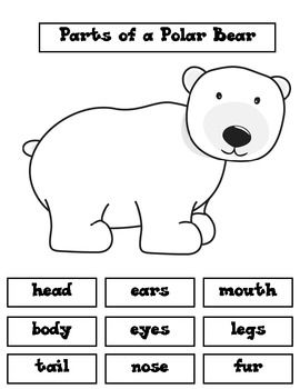 "My TK students cut out the polar bear and the labels. They glued them on a large piece of construction paper to make a ""poster"". They used their poster to tell each other about the parts of a polar bear. Older students could use the labels to make a Brace Map."