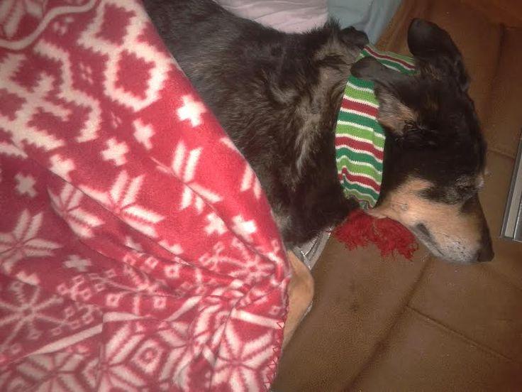 Xmas scarf 2014