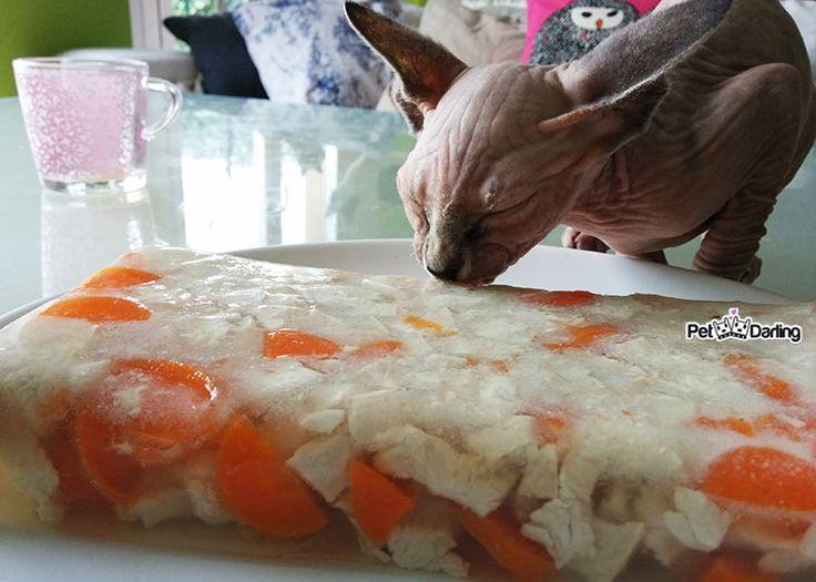 (♥‿♥) Como hacer gelatina para gatos casera con esta receta facil y con solo 3 ingredientes: pavo, zanahorias y gelatina neutra. Comida sana y natural!