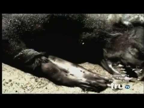Plum Island New York Conspiracy