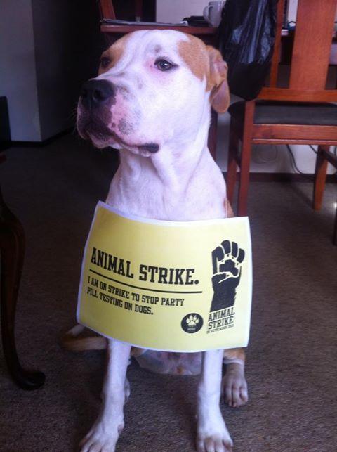 No hugs today, Leo's on strike too! #animalstrike