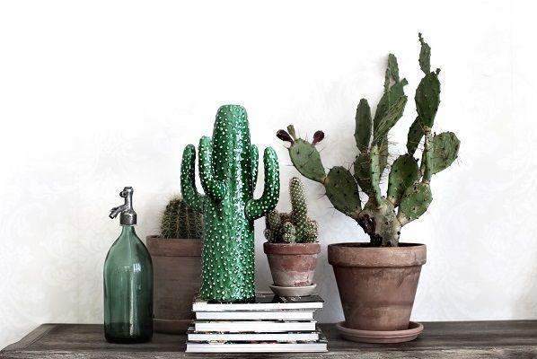 serax kaktus - Google-søgning