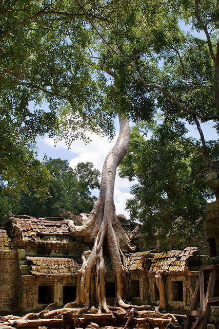Ta Prohm, Angkor.