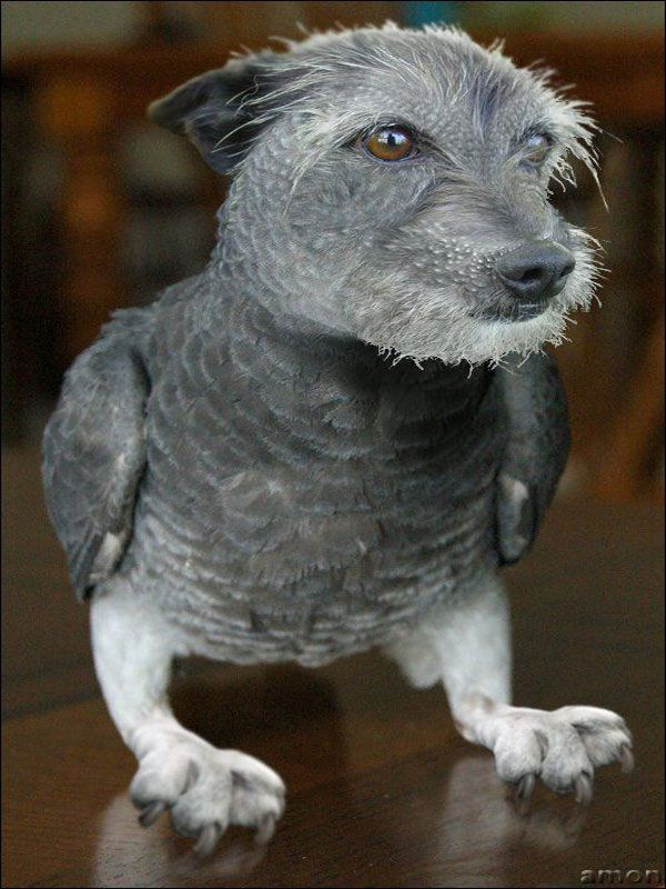 Photoshop Animal Hybrid Has Science Gone Too Far? Visit for more Hybrid  Animals!