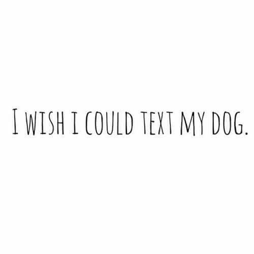 I wish!...would text them to clean the house!..