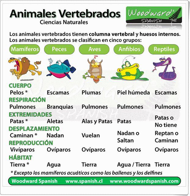 """""""Animales Vertebrados"""" es una exposición sencilla y clara de """"woodward spanish"""" sobre el tema  con esta reveladora infografía."""