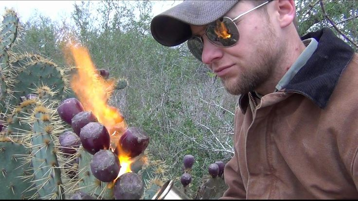 Ever wonder what cactus tastes like? This video shows how to go about harvesting and eating Prickly Pear Fruits. Enjoy a new type of food or learn a survival...