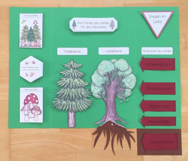 Momentan gestalte ich mit meiner Klasse ein Lapbook zum Thema Wald. Da ich kein Beispiel gefunden habe, das alle Themenbereiche abdeckt, die mir wichtig waren, habe ich mich selbst an die gestalterisc