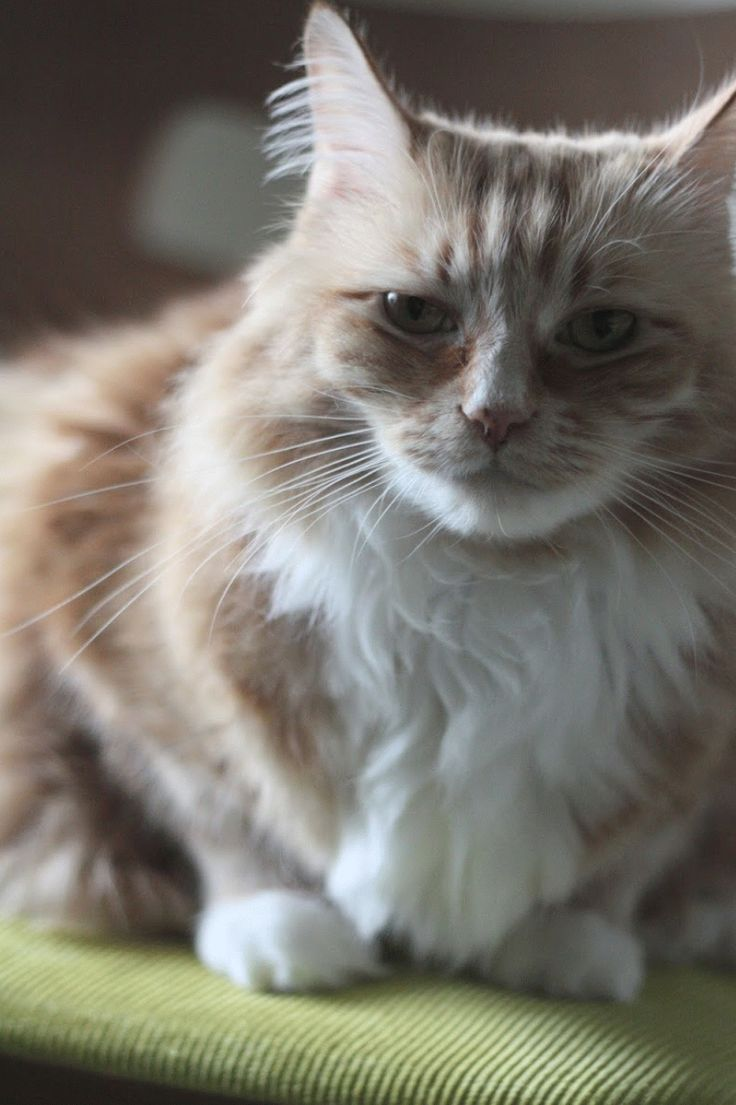 Cat Sitting Photo & Gif Gallery Cat sitting, Cats, Gallery