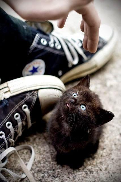 Cute black kitten Check more at http://blog.blackboxs.ru