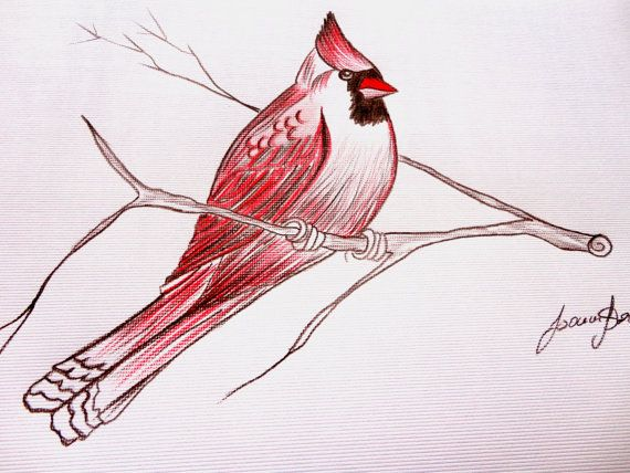 Cardinal Bird Art Pencil Drawing On Fat Paper By