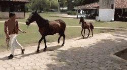 Funny Horse Trot - You go, Prancey McPrance Prance!