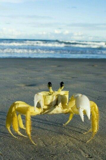 "** "" Yoo sez yoo haz crabs likes itz a bad thing."""