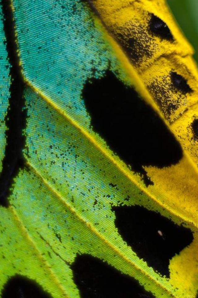Aile de papillon.  Source - blog de Elsa Mora