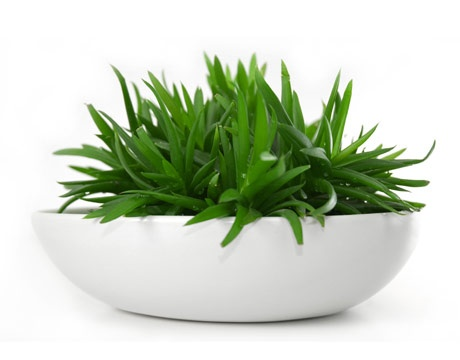 Aloe - low light house plant