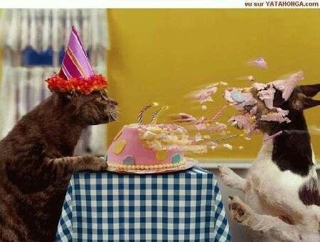 Kat en hond  ,dierendag,