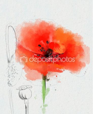 papoilas vermelhas aquarela — Foto Stock © LediMadlen #70206333