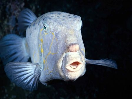deep sea living Fish living within this region have had to develop modifications to their body plans that the deep-sea begins in the bathypelagic at 1000 meters.