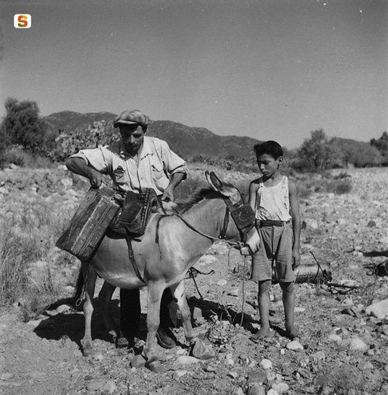 Trasporto di bidoni di DDT su un asino, 1950 | by Suschitzky Wolfgang #sardegna #sardinia