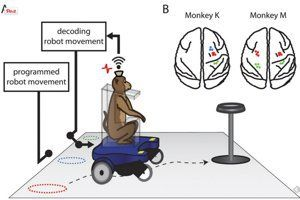 Watch Monkeys Drive Wheelchairs With Just Their Thoughts - Singularity HUB