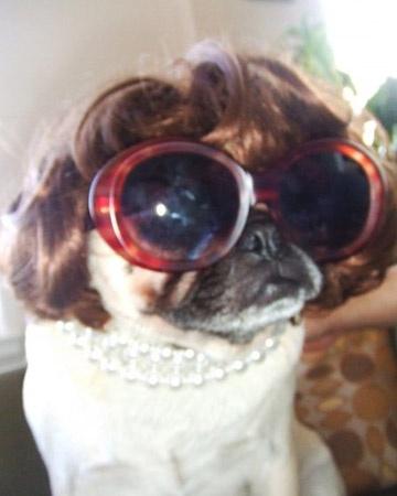 Anna Wintour pug
