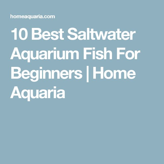 The 25 best saltwater aquarium setup ideas on pinterest for Starting a fish tank for beginners
