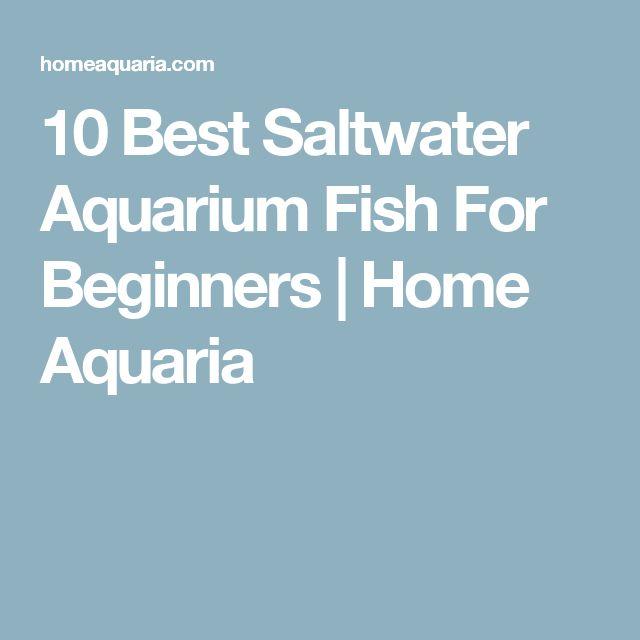 The 25 best saltwater aquarium setup ideas on pinterest for Saltwater fish tanks for beginners