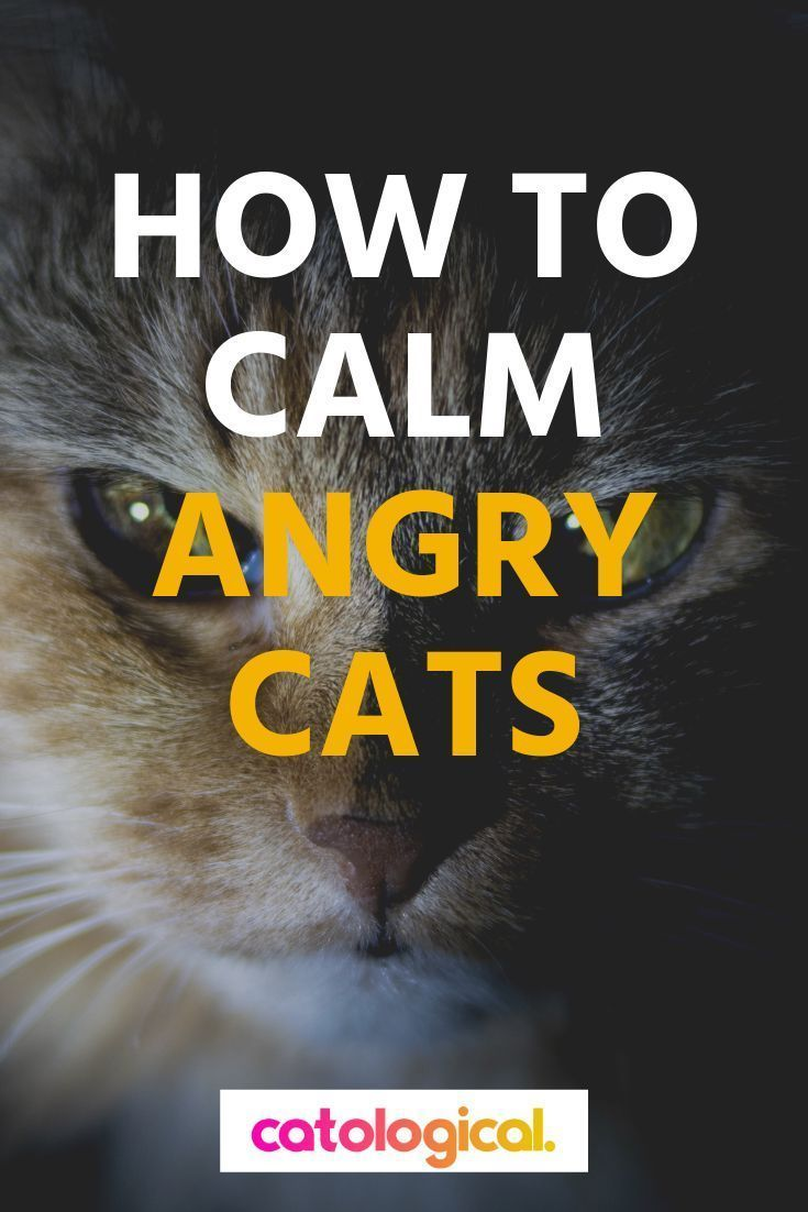 How To Calm Down Your Cat When It S Angry Scared Or Agitated Cat Training Cat Behavior Angry Cat