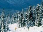 Trakkers Cross Country Ski Club - Home