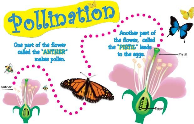 Do you know how pollination happens? How do animals help plants with the process? Read some fun facts about pollination and fertilization of plants here: http://easyscienceforkids.com/all-about-pollination/