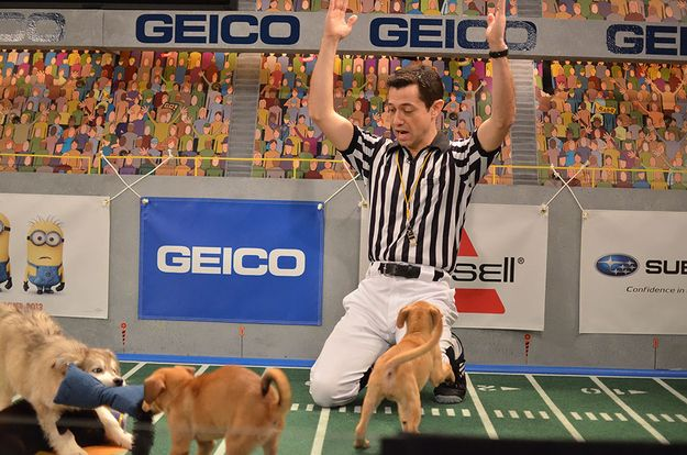And whenever the ref has to intervene. | The 58 Cutest Things Found Behind The Scenes At The Puppy Bowl