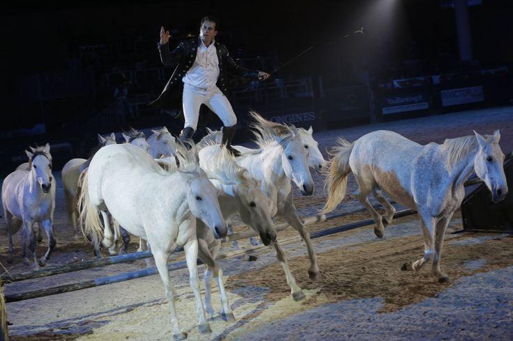 Gala d'oro 2013 a Fieracavalli Verona