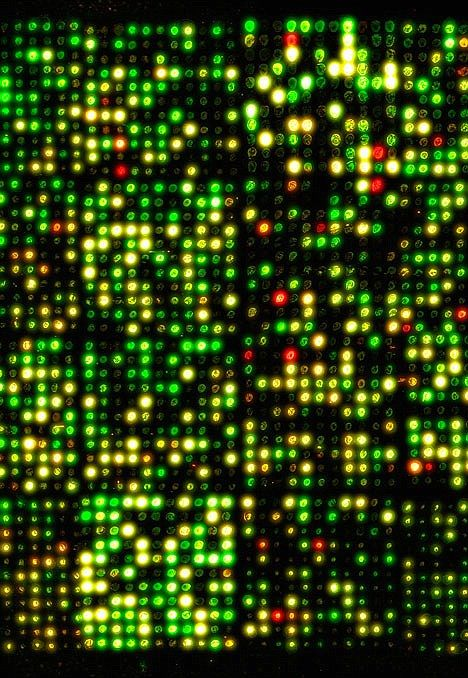 This micro array DNA chip shows off the structure of the human genome - but how…