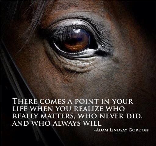 Pinterest Animal Quotes: 306 Best Images About Horses & Quotes On Pinterest