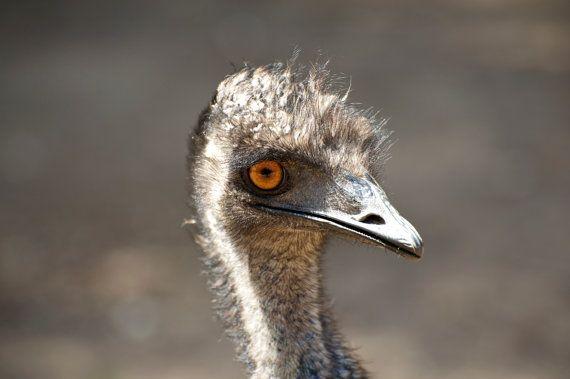 Emu Smile by GPNaturePhotos on Etsy