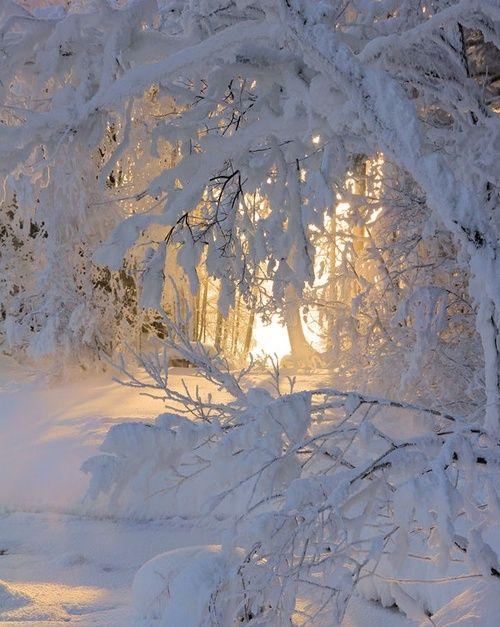 #winter  #snow  #nature